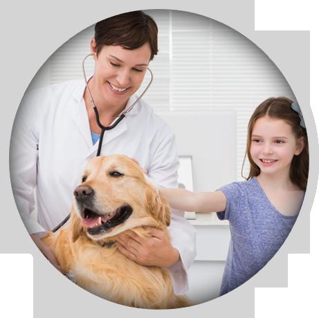 Vet Surgeon | Common Cysts