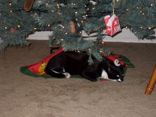 Avoiding Pet Hospital Trips This Holiday Season
