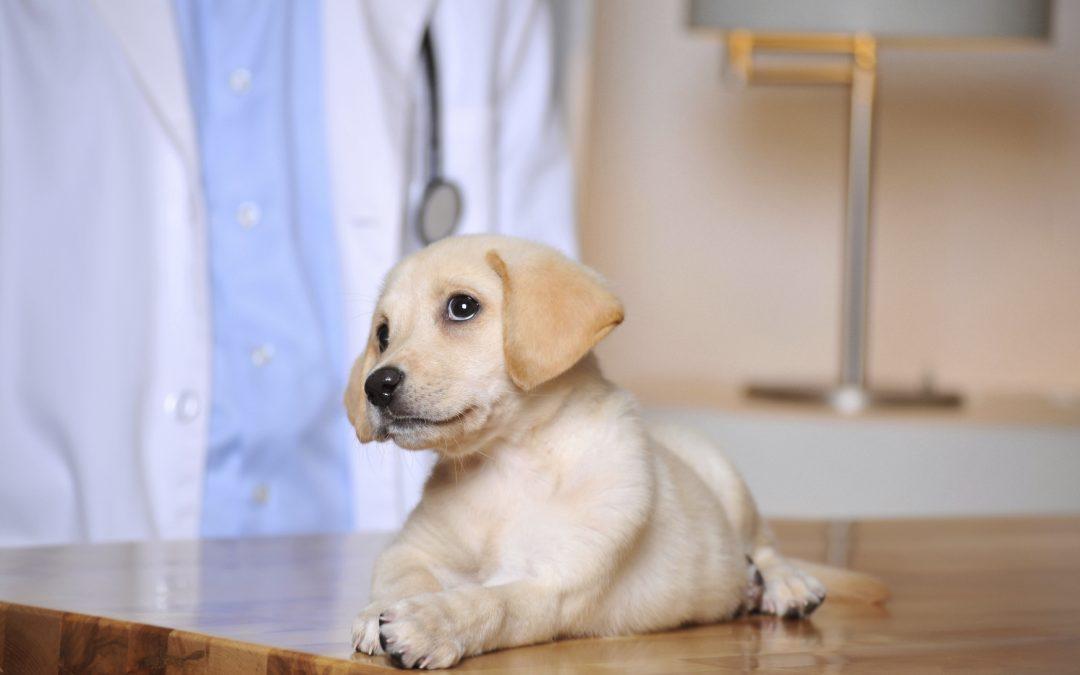 Vet Hospital | Puppy Vaccinations