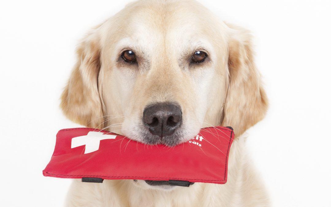 Pet Emergency | Xylitol Toxicity