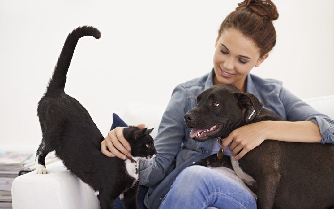 Local Veterinarian   Pet Benefits