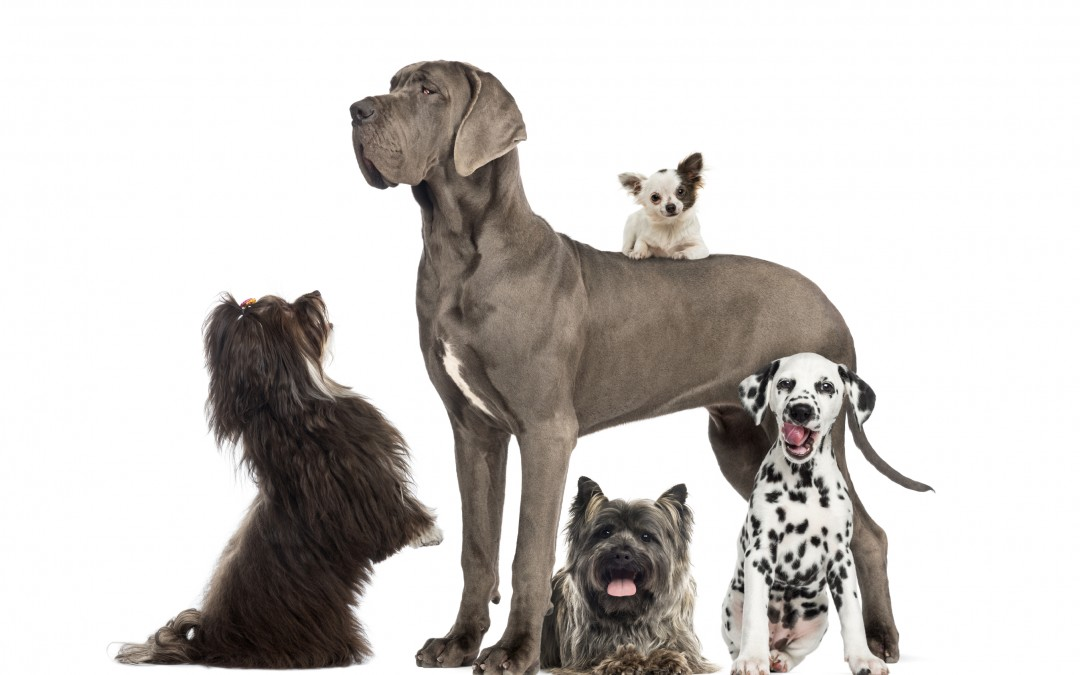 Vet Finder | Which Dog is for You?