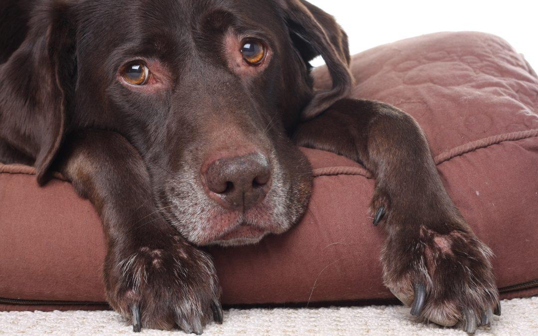 Best Veterinarian   Aging Pets