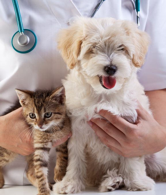 Pet Yearly Wellness Exams