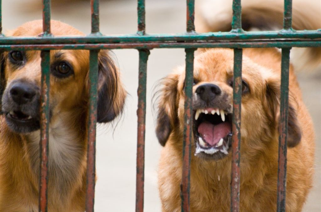 Details on rabies blog - dogs behind bars