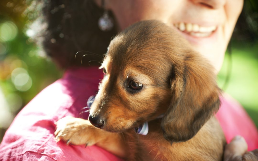 Can You Catch A Disease From Your Dog?