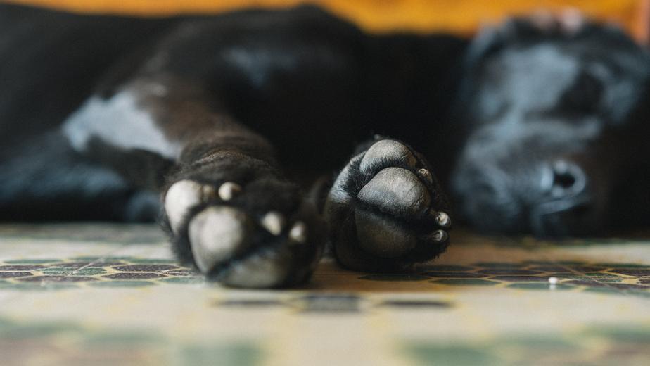 Your Pet's Sleep Health