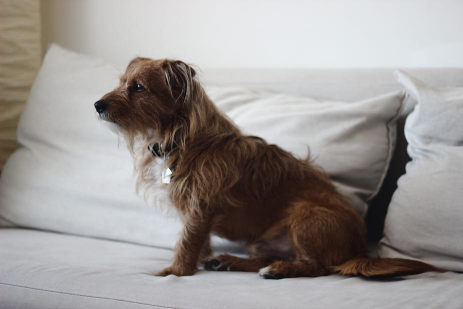 The Importance of Proper Grooming and Pet Care