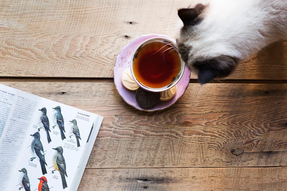 pet parasites - cat looking into a cup of tea