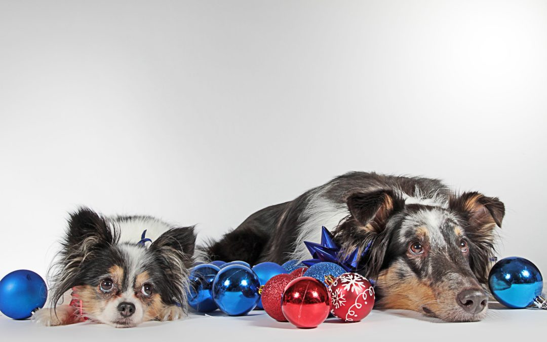 Dog-Friendly Holiday Events in Phoenix - two dogs lying down, surrounded by holiday decorations