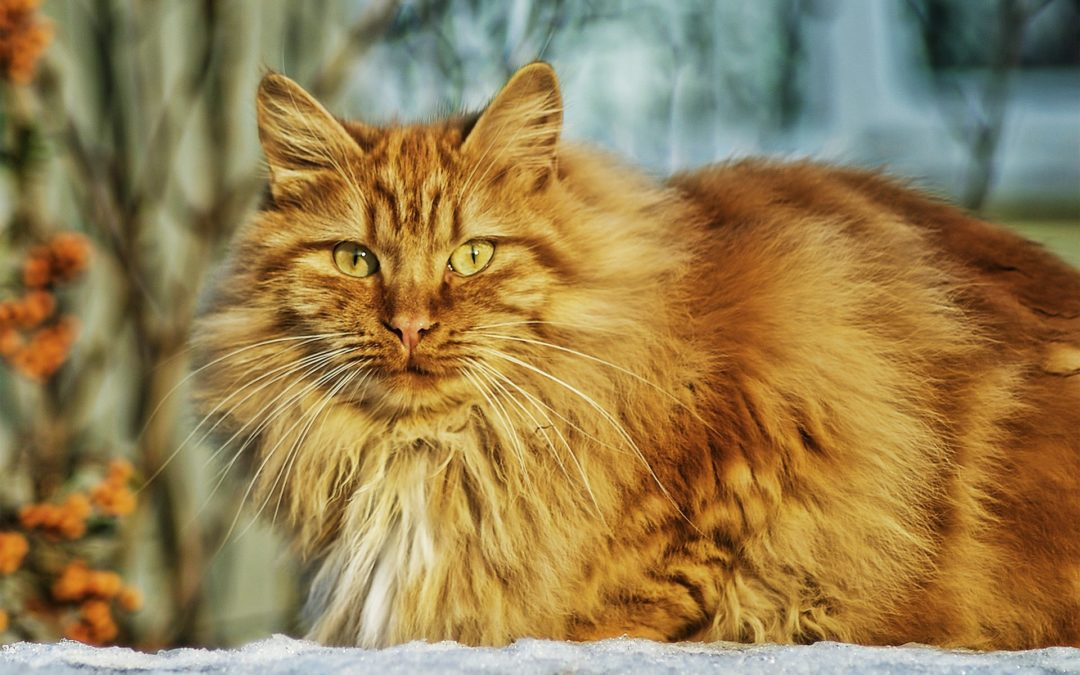 Caring for Elderly Cats