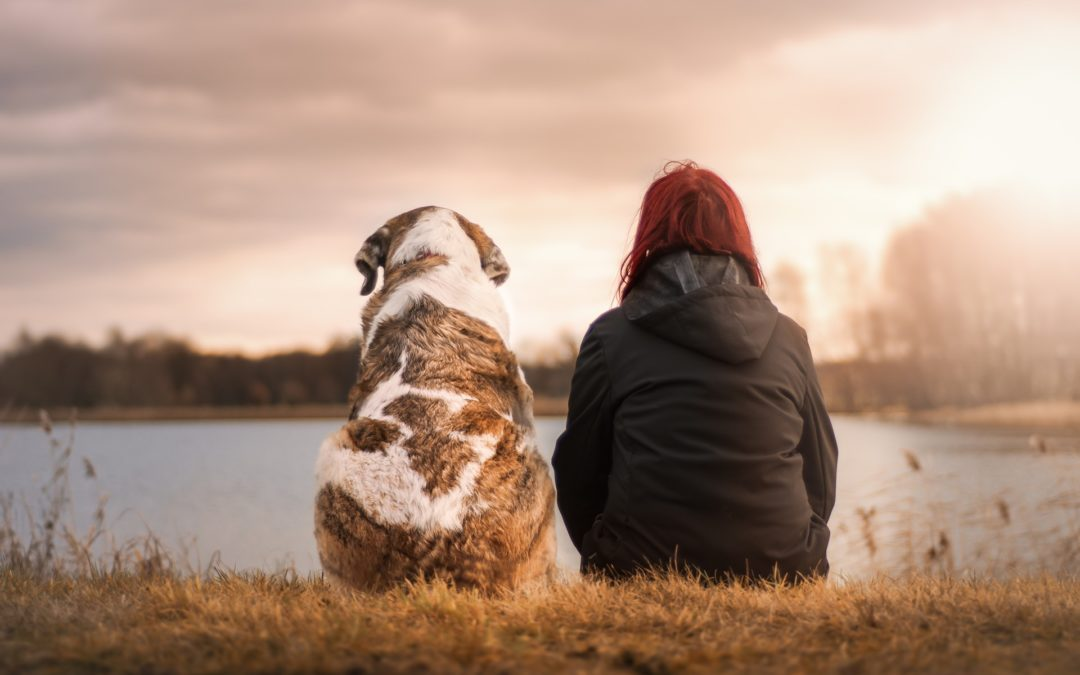 license your dog in Gilbert - person and dog sitting beside each other looking out onto a lake