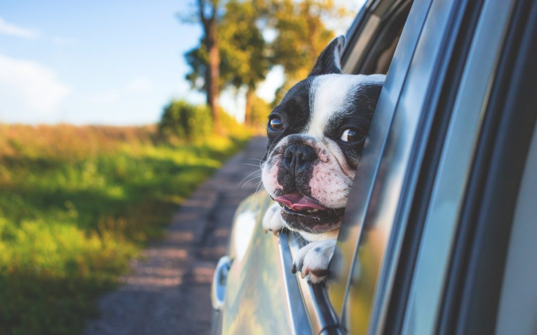 Safety Tips for Traveling With Your Dog by Car