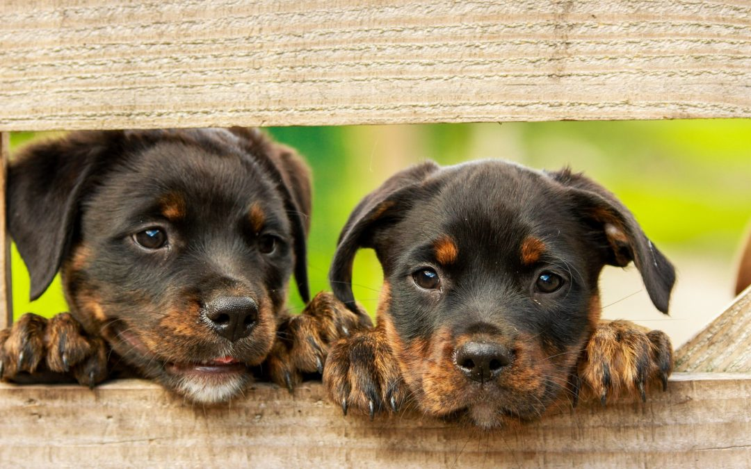 Timeless Dog Names for Your New Puppy