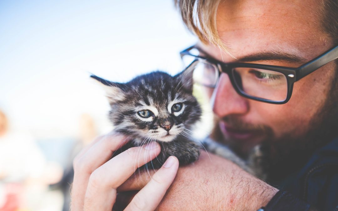 cat care 101 - general cat care - person holding a kitten