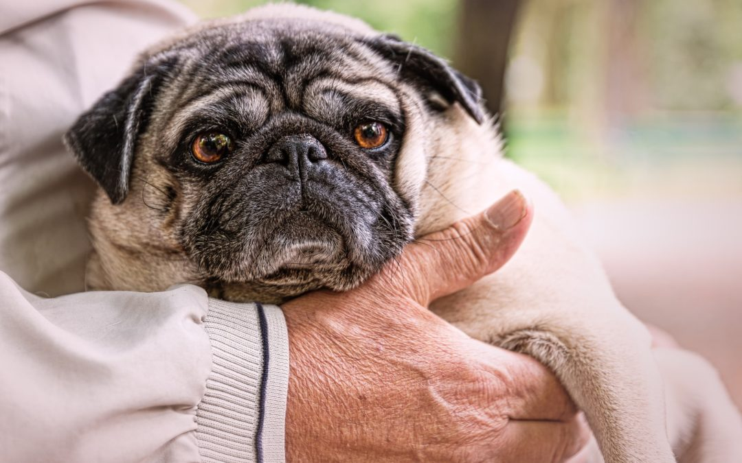 what to expect with an aging dog - person holding dog