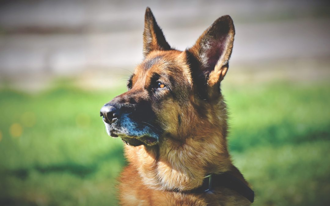 Using a Kong For Dog Training and Behavior Problems