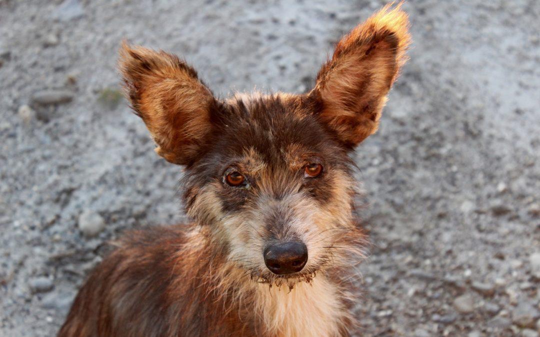 Animal Homelessness: Consider Adopting Your Next Pet