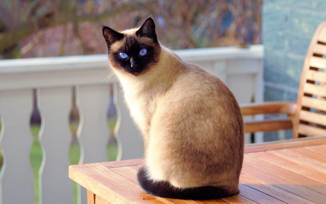 Feline Leukemia Virus Vaccine & Life Expectancy