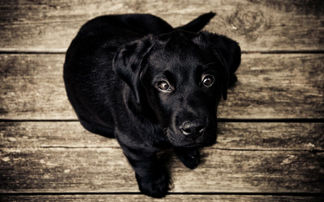 Causes and Treatments for Dog Hot Spots