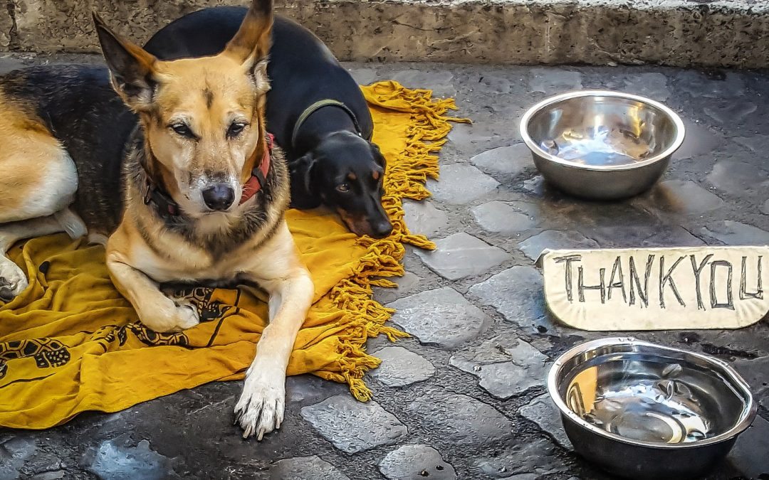 Is Scheduled Feeding or Free Feeding Right for Your Dog?