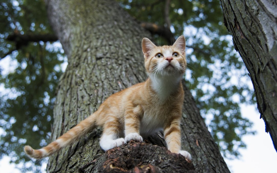 How to Take Care of an Outdoor Cat