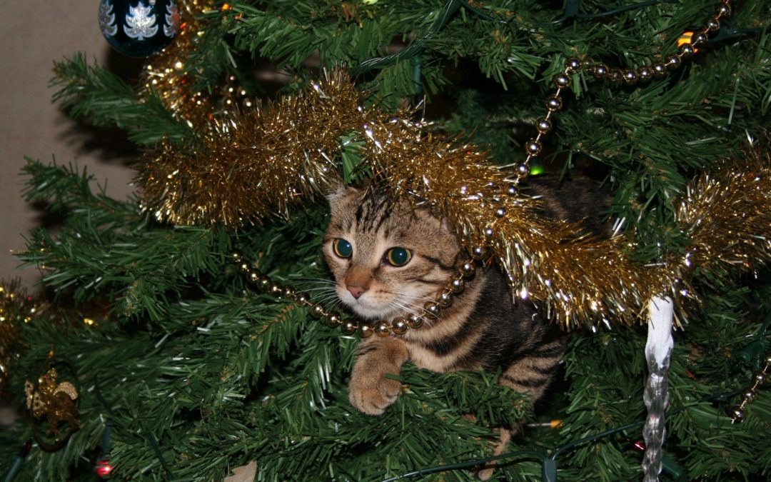 pet safety tips holidays - cat in christmas tree