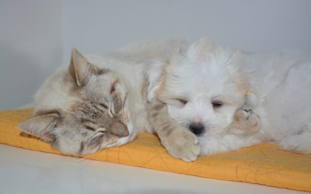 Do Our Dogs & Cats Dream?