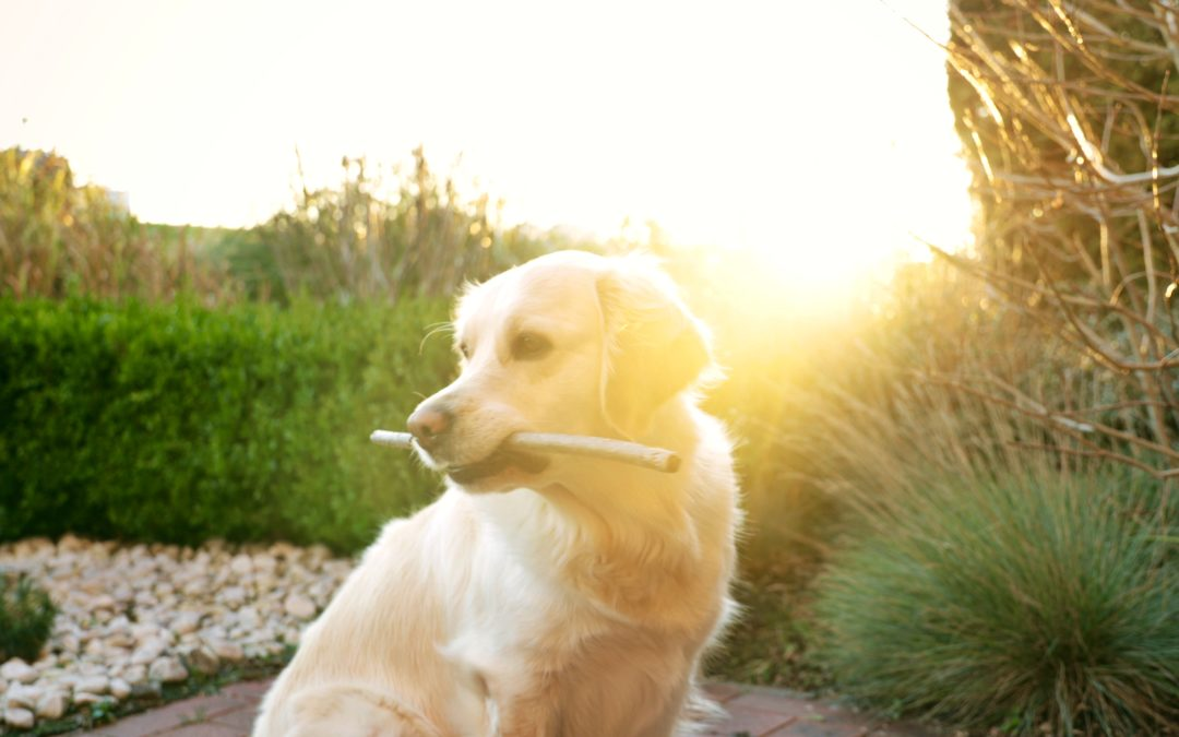 The Importance of Dog & Cat Dental Care