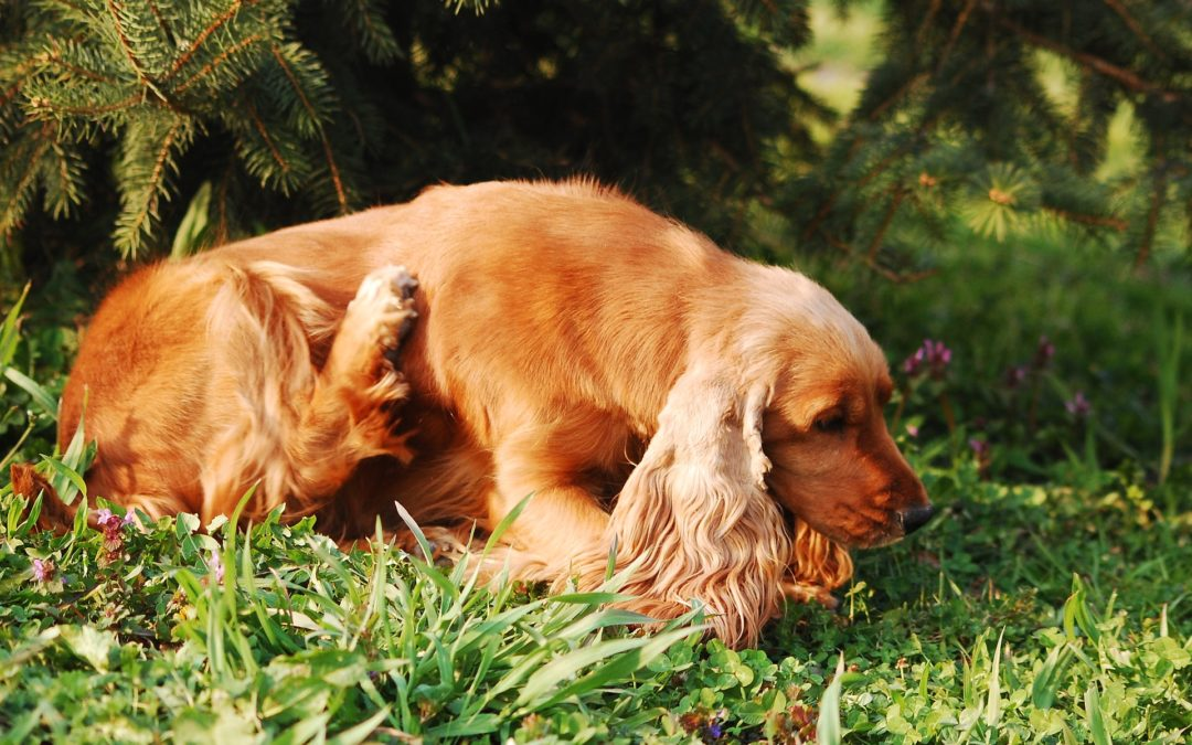 4 Common Dog Skin Problems