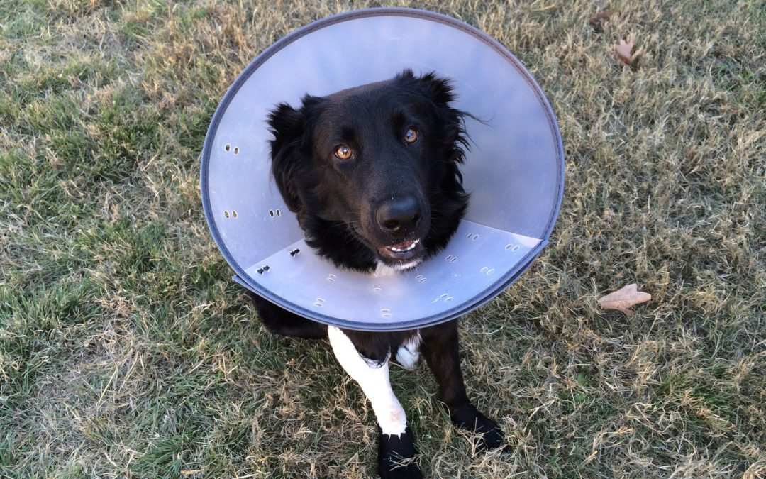 How to Make a Dog Cone More Comfortable
