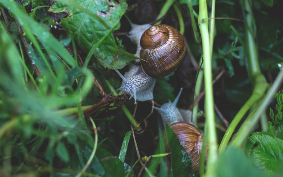 nail bait safe for dogs - snails in garden