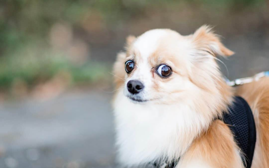 Helping Your Dog With Separation Anxiety