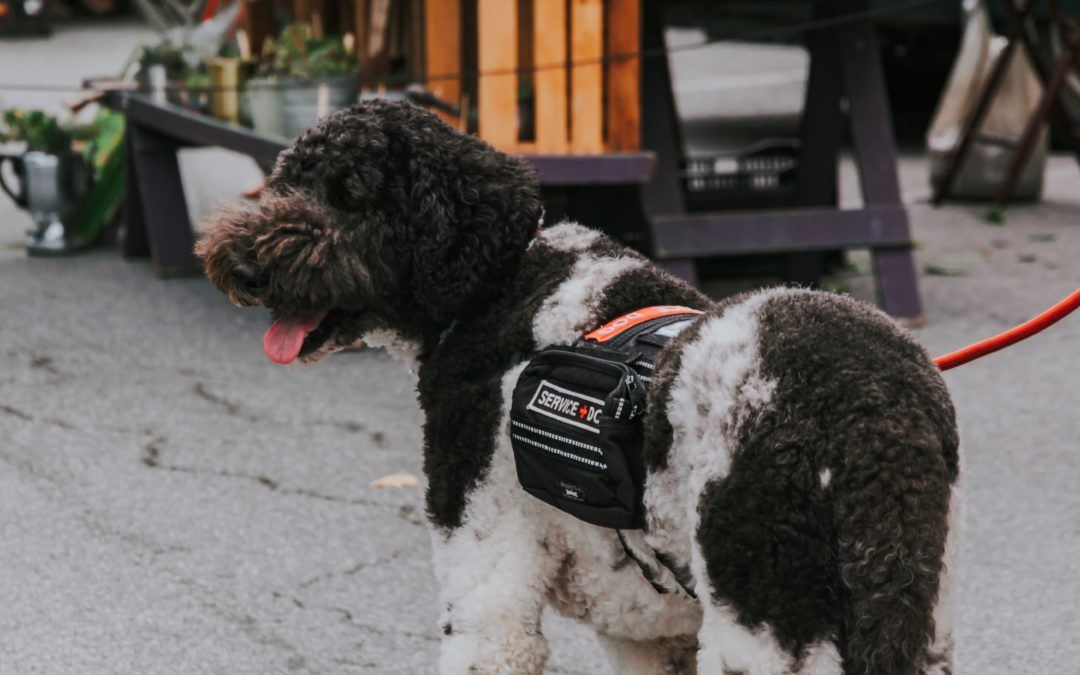 What Are The Different Types of Service Dogs