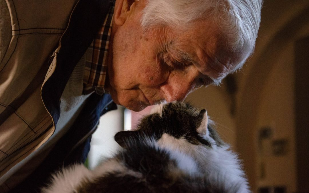 cat old age problems - cat with elderly owner