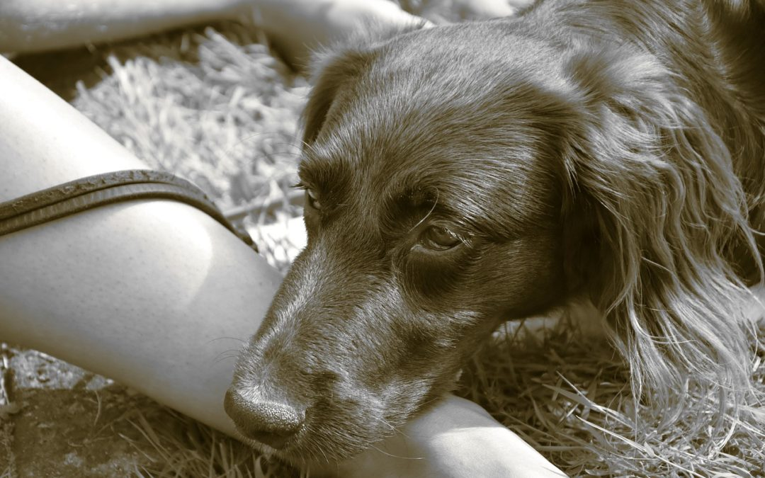 What Causes Bloat in Dogs?