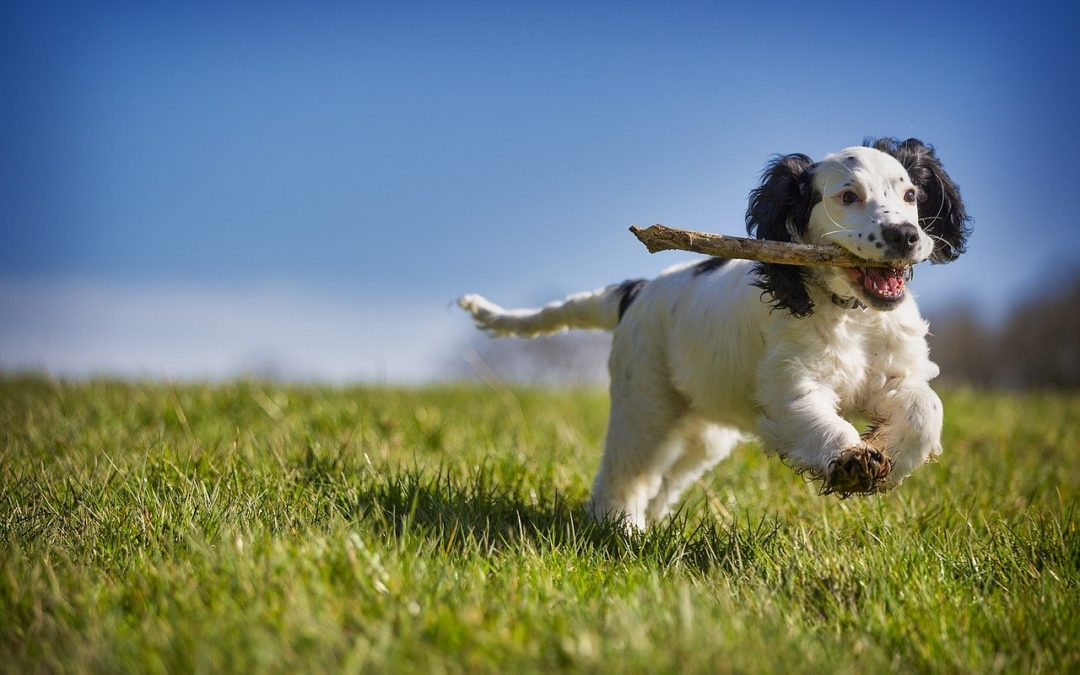 Is Your Dog Bored? Here are 4 Boredom Busters