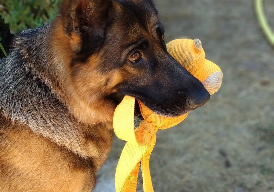 Choosing the Best Dental Chews for Dogs