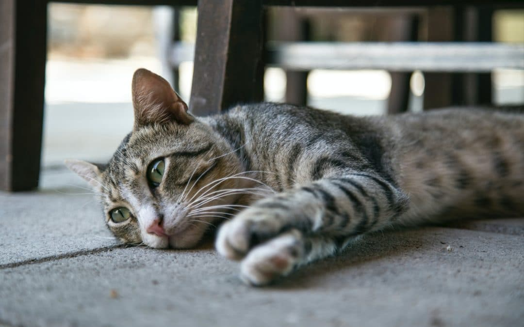 Do Cats Get Lonely?