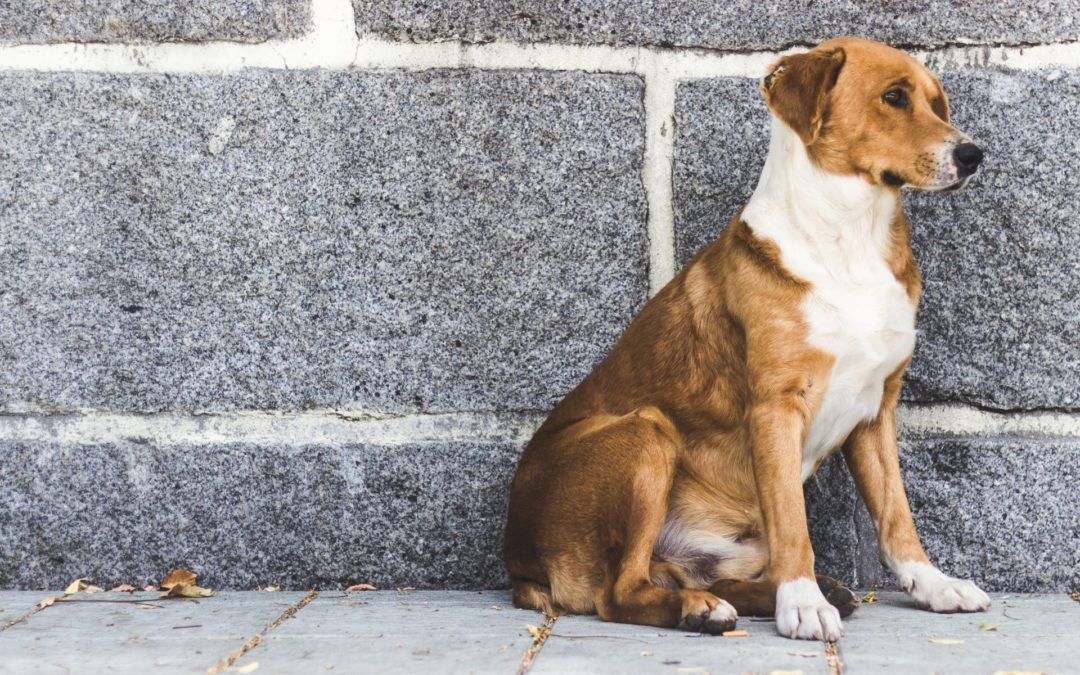 How You Can Help Prevent Pet Overpopulation