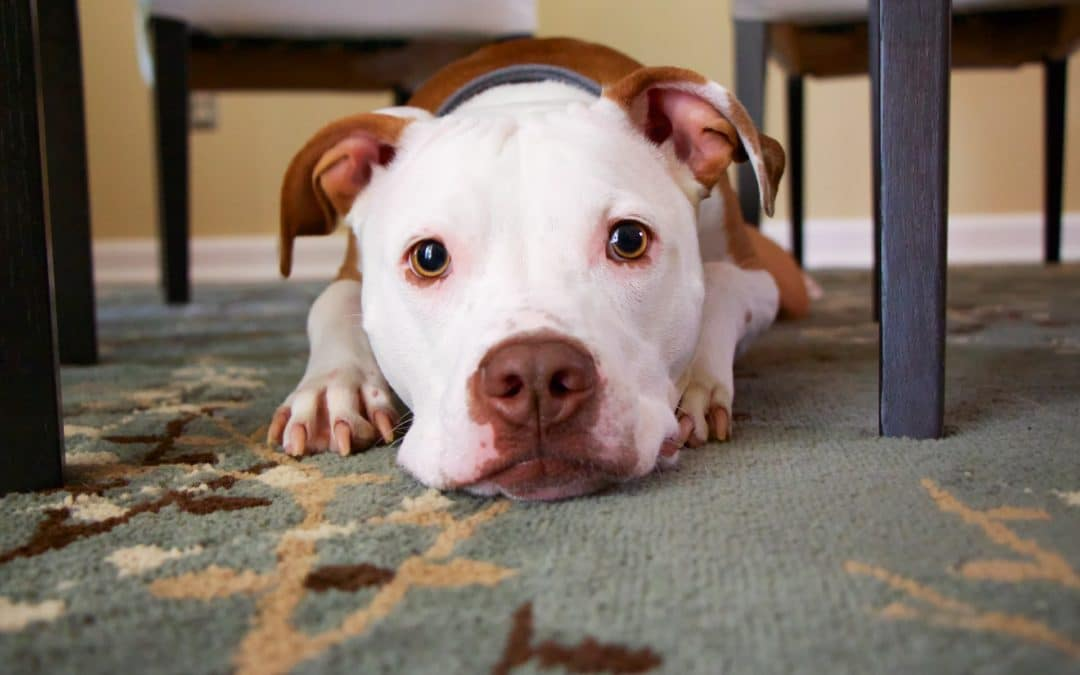 Why Neutering Your Dog is Vital to His Health