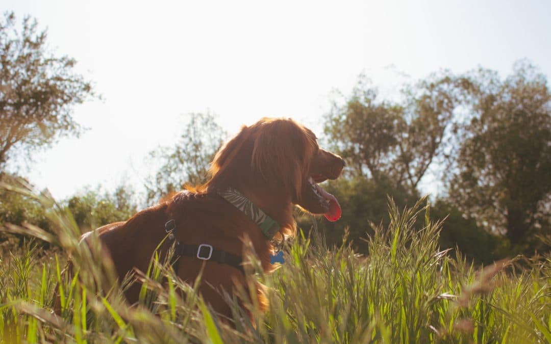 Preventing Ticks in Your Pets This Summer