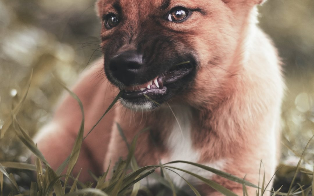 Why Does Your Dog Eat Grass?