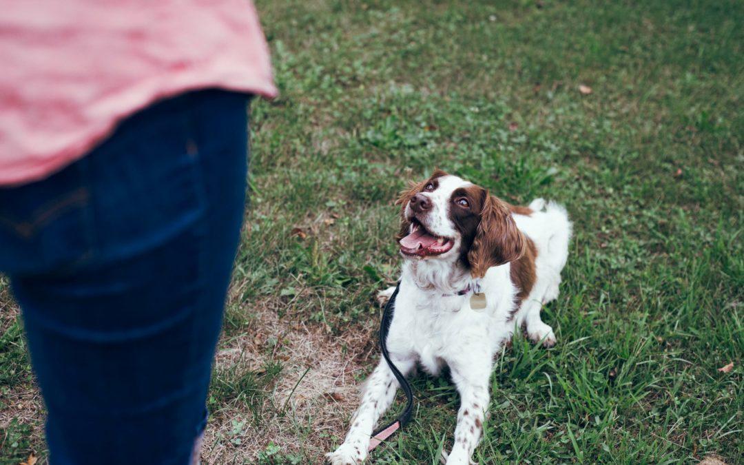 Is Professional Dog Training Worth It?