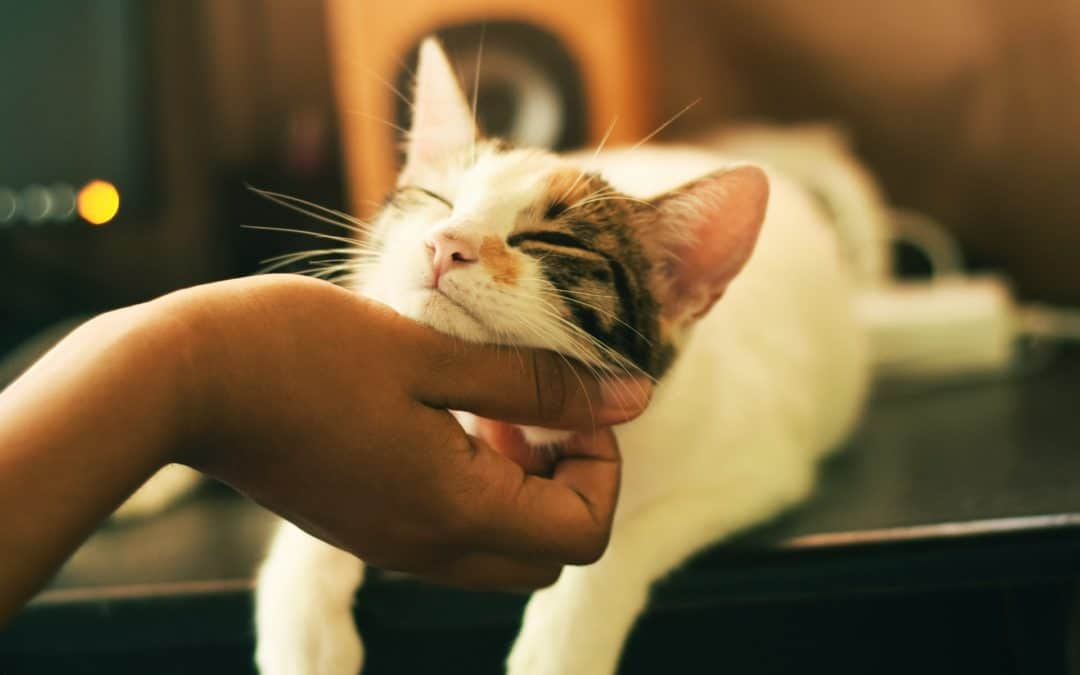 3 Common Cat Illnesses and How to Prevent Them